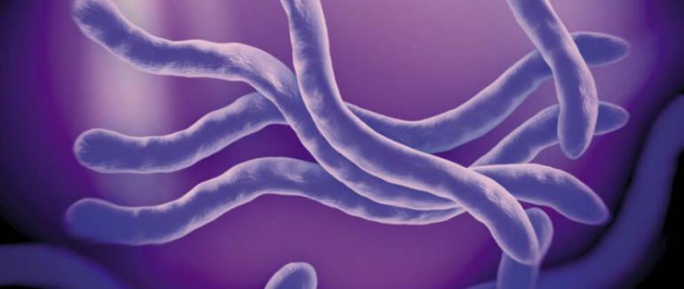 Paraziti – mýty a skutečnost