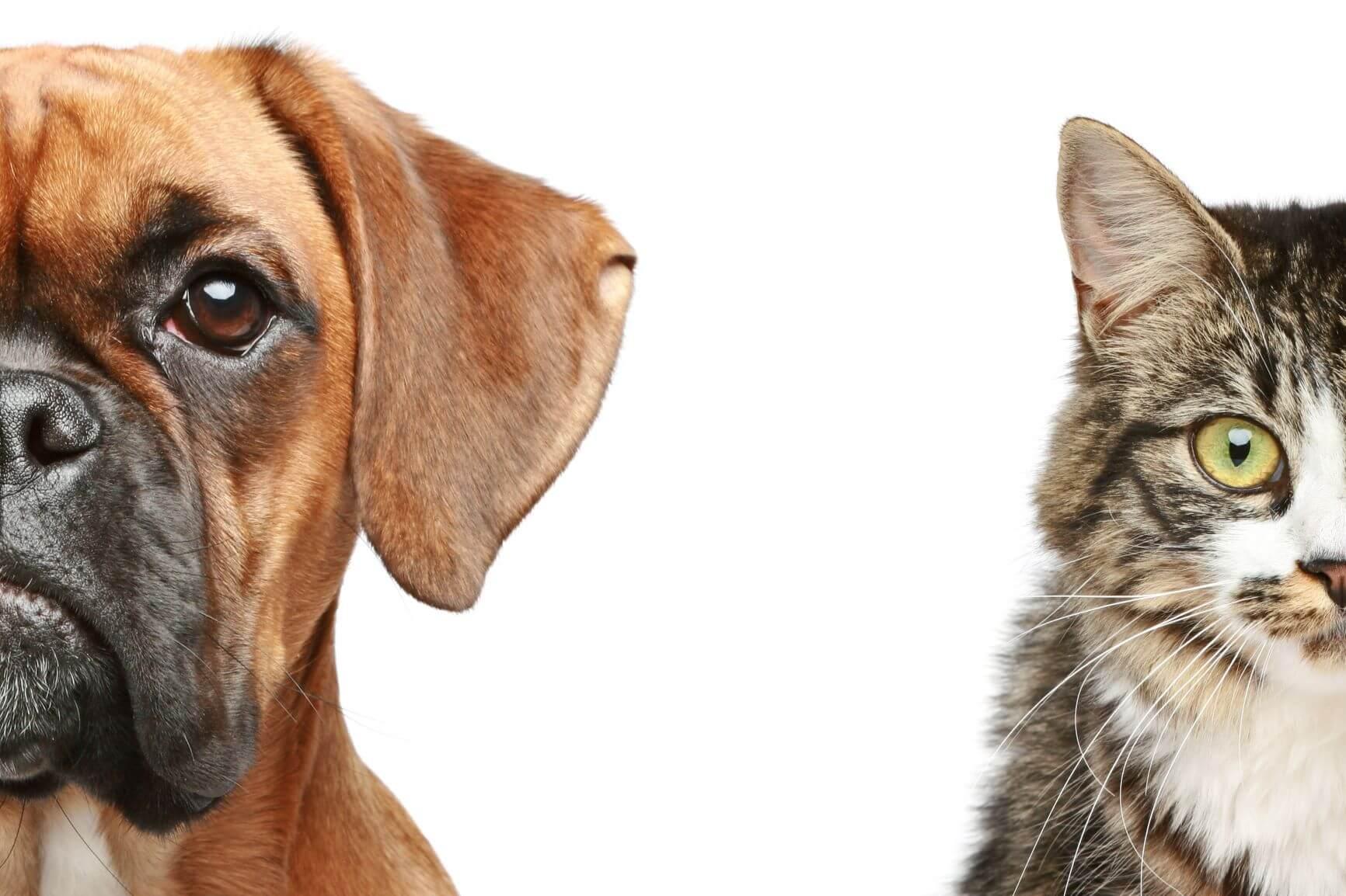 Laboratorní diagnostika je důležitým článkem v procesem stanovení diagnózy a pro zahájení účinné terapie zvířat. Včasná detekce patogenů v populaci zvířat je důležitým článkem v boji proti jejich vzniku a šíření. Výsledky vyšetření slouží nejen jako podklad pro diagnostiku ale je základem ochrany lidí před chorobami přenosnými ze zvířat na člověka.