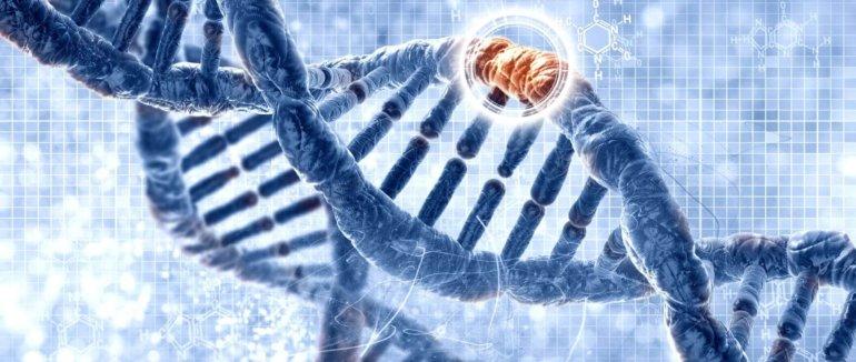 Telomery, biologický význam a jak je můžeme ovlivnit?